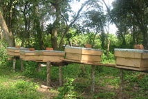 Hives on stands